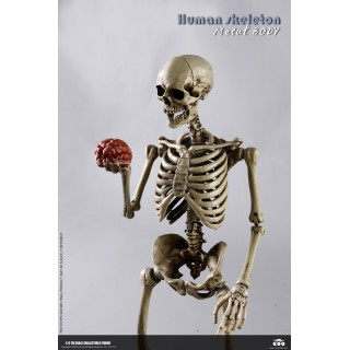Human Skeleton Diecast 1/6 COO Model