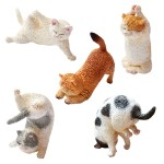 ANIMAL LIFE Baby Yoga Cat BOX Of 6 Yendar